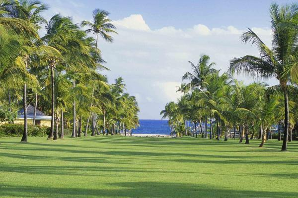 Click image for larger version.  Name:palms-st-kitts-nevis-400x600.jpg Views:2821 Size:56.1 KB ID:23349