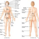 "In order to describe body parts and positions correctly, the medical community has developed ""a"