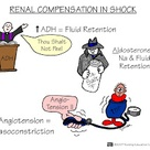 Nursing Mnemonics and Tips: Renal Compensation In Shock