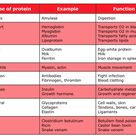 These are the types of proteins and their many functions in our bodies.