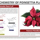 The Chemistry of Poinsettia Plants. Click 'visit site' to read more!