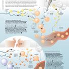 Reducing Inflammation Infographic
