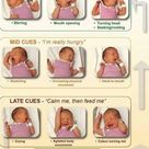 Baby Signals and cues