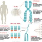 What Are Telomeres And How Could They Be Controlling Your Life?
