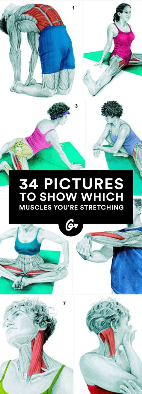 We love these Illustrations of muscles working as we stretch them. #stretching #HotMamaFit  Via grea