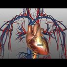 Heart Structure and Function Basics