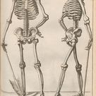 "Gérard de Lairesse, Skeletons from ""New School in the Art of Drawing"", 1745. Leipzig. #med"