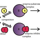 Competitive inhibition is interruption of a chemical pathway