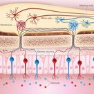 Sensory neurons in the nose are activated by specific odorants or groups of odorants.