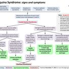 Cauda Equina Syndrome Flow Chart