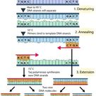 Science Info World: POLYMERASE CHAIN REACTION (PCR)