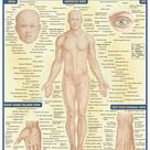 Surface Anatomy Download this review guide and improve your grades. #education #ebooks #studyguides