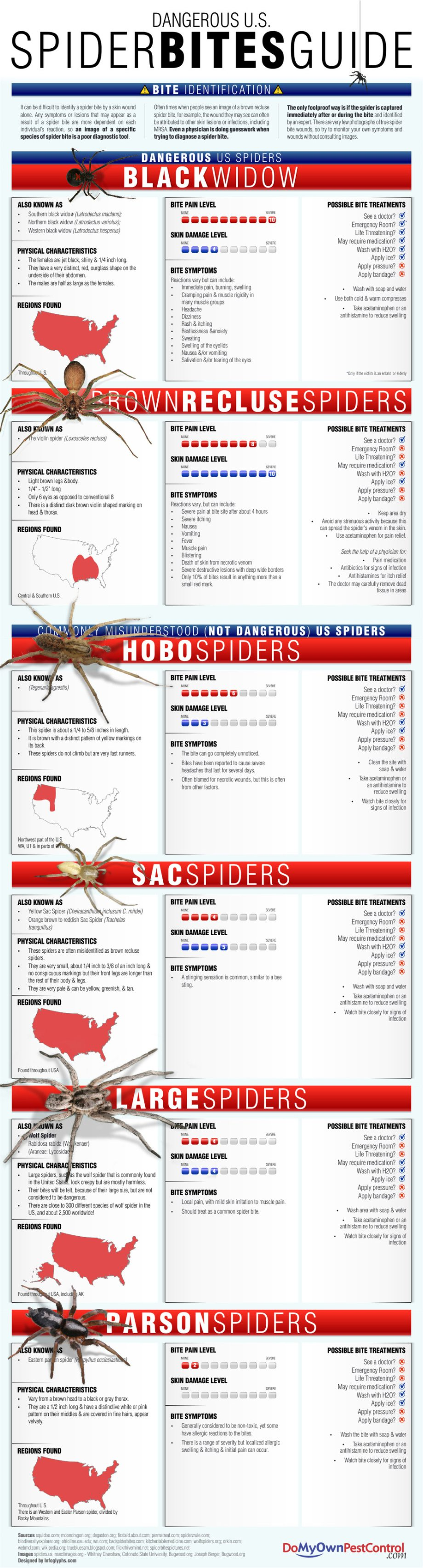 Tips everybody should know before going camping this summer (22 HQ Photos) SPIDER BITES