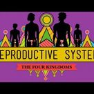 The Reproductive System: How Gonads Go - CrashCourse Biology #34 - YouTube