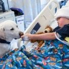 Hospital Therapy Dogs Showcased in New PBS Documentary The show followed a handful of human/dog team