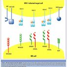 HIV-1-infected target cell
