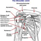 Gerber's Lift Off Test - Orthopedic Shoulder Examination