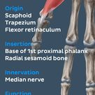 Abductor pollicis brevis muscle