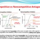 Competitive and Noncompetitive Antagonists