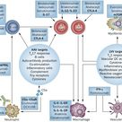 Potential therapeutic targets in AAV and LVV.