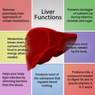 Liver-functions. Your body is as young as your liver's health. //www.medimantra.com