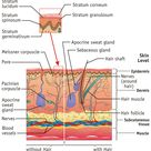 Integumentary System Facts