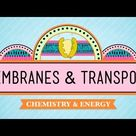 Membranes & Transport: Crash Course Biology #5