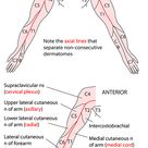 Instant Anatomy - Upper Limb - Nerves - Skin - Dermatomes