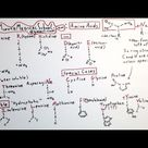 The 20 Amino Acids - One Minute Medical School