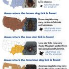 Three main tick borne diseases: Lyme Disease, Rocky Mountain Spotted Fever, and Ehrlichia.