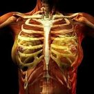 Costochondritis in Fibromyalgia Chest & Ribcage Pain.