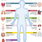 Infographic - Human Body Systems Diagram