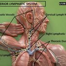 how to detox lymphatic system