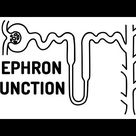 FUNCTION OF THE NEPHRON made easy!!
