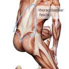 How a Mysterious Body Part Called Fascia Is Challenging Medicine Fascia is a web of fibrous tissue t