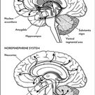 Play, stress and the learning brain