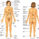 anatomical position and body regions.. Must memorize this for the test!