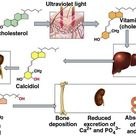 Calcitriol is the biologically active form of vitamin D and therefore has a more immediate