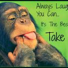 Always laugh when you can