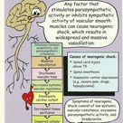 Neurogenic shock is a distributive type of shock resulting in low blood pressure