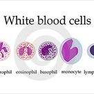 White Blood Cells; Study Tips!! (Agranulocytes=Monocytes, Lymphocytes; Granulocytes=Neutrophils, Bas