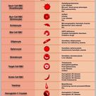 Reporting and grading of abnormal red blood cell morphology