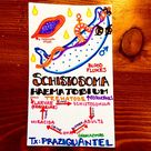today's #microbe: Schistosoma Haematobium, the nasty little worm responsible for most bladder cancer