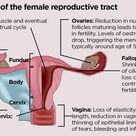 Anatomy and physiology of ageing 8: the reproductive system ...