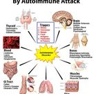 Tissues of the body affected by autoimmune attack