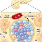 Controlling Blood Sugar: An overview of what insulin does