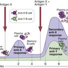 Antigens X and Y induce the production of different antibodies (a reflection of specificity). The se