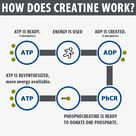 ADP - ATP Cycle to produce energy