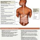digestive system overview: http://www.highlands.edu/academics/divisions/scipe/biology/faculty/harnde