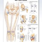 Hip and Knee anatomy poster with 2 grommets